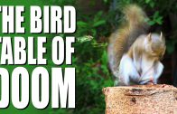 Garden Squirrel Control – The Bird Table of Doom