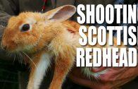 Shooting Scottish Redheads
