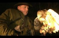 Lamping rabbits with hawks in Sussex