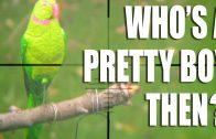 Parakeet shooting leads the news – HotAir