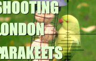 Shooting Parakeets in London