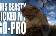 Squirrel steals GoPro – HotAir Airgun News