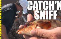 Stinky Fishing – beachcasting bait tips
