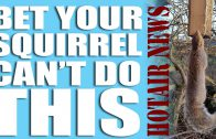 Bet your squirrel can't do this – HotAir News
