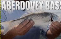 Fly fishing for Aberdovey Bass