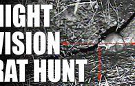 Night Vision Rat Hunt