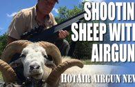 Shooting Sheep with Airguns – HotAir airgun news