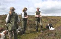 Shooting walked-up grouse