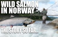 Wild Salmon in Norway – The story so far…