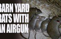 Barnyard Rats with an Airgun
