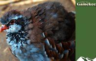 e460-partridges