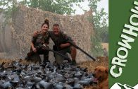 Hannah Gibson hits the pigeons – Crowhow
