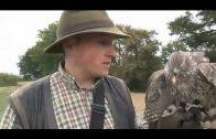 How to catch partridges with goshawks