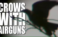 Shooting Crows with Airguns